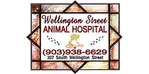 Wellington Street Animal Hospital, PLLC